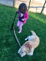 Playing sticks with Murphy
