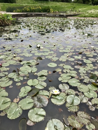 Lilies on the pond. There were several people painting them which was cool to see!