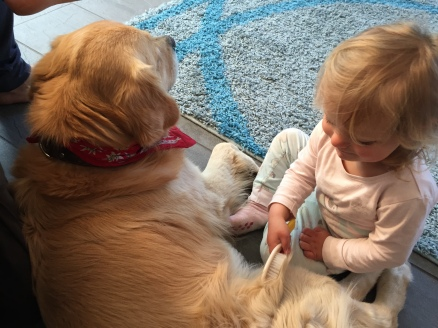 Charlotte giving Murphy a brush. They are best friends!